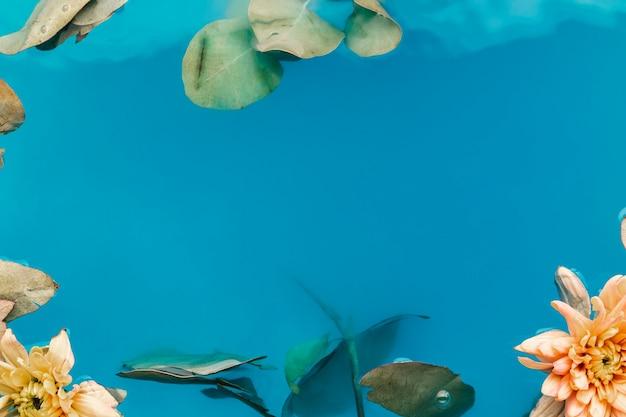 Chrysanthèmes dans l'eau bleue avec espace de copie Photo gratuit