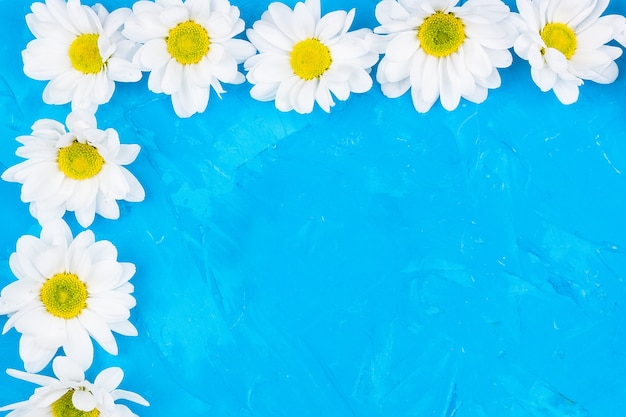 Chrysanthèmes sur fond bleu Photo Premium