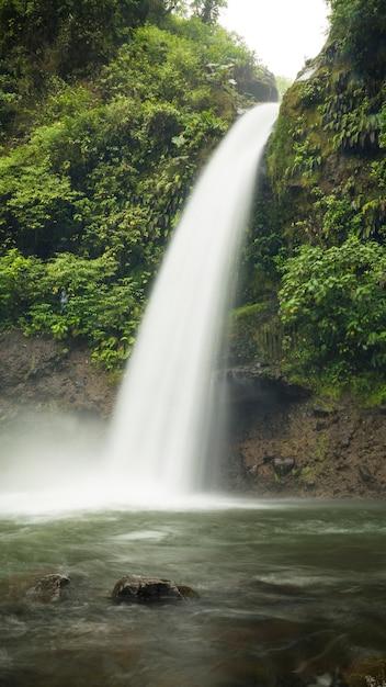 Chute d'eau dans la belle forêt tropicale du costa rica Photo gratuit
