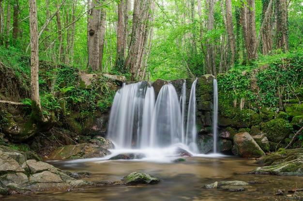Chute d'eau dans une forêt catalane Photo Premium