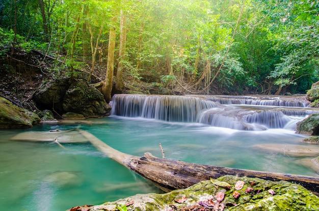 Chute d'eau dans la forêt profonde Photo Premium