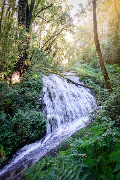 Chute de tharn sadet à kew mae pan nature trail sentier de randonnée menant à travers la jungle Photo Premium