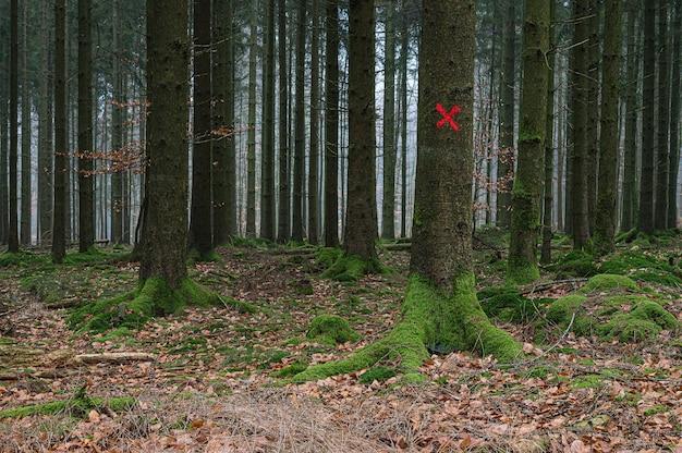 Cible Rouge Sur Un Arbre Dans La Forêt Photo gratuit