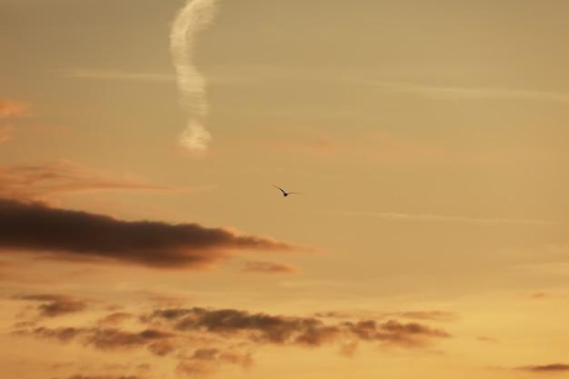 Ciel avant le coucher du soleil, oiseaux dans le ciel. oiseau qui vole pendant le coucher du soleil et le crépuscule avant le ciel Photo Premium