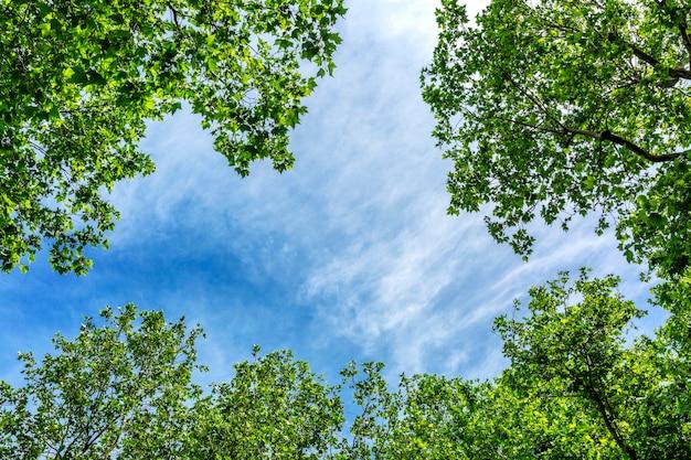 Ciel Bleu Encadré De Branches D'arbres En Fleurs Photo Premium
