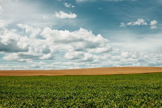 Ciel bleu nuages blancs. Photo Premium
