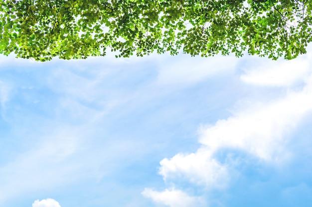 Le ciel est clair et les feuilles ont bonne mine. c'est utilisé comme arrière-plan. Photo Premium
