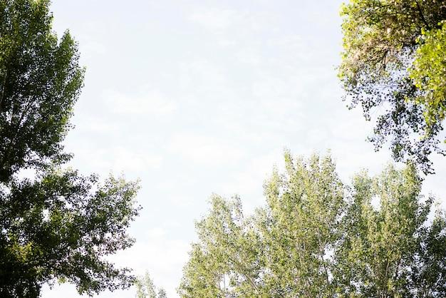 Ciel Faible Angle Avec Des Arbres Photo Premium