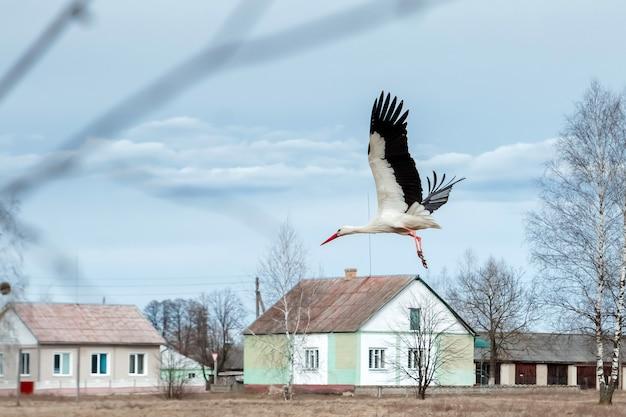 Cigogne blanche vole devant les maisons Photo Premium