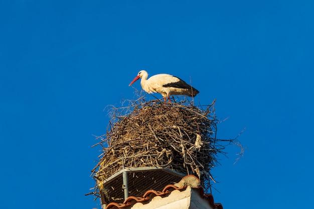 Cigogne Dans Son Nid Sur Le Toit D'une église. Journée Ensoleillée Et Ciel Bleu. Photo Premium