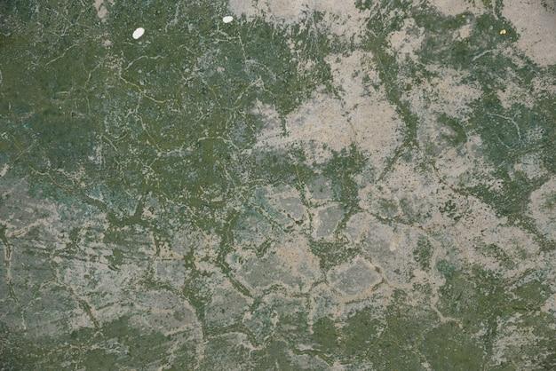 Ciment de couleur verte sur la texture et le fond Photo Premium