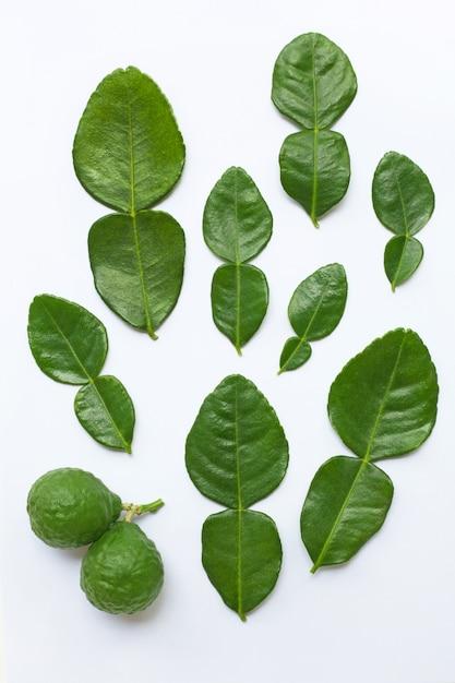 Citron kaffir bergamote avec feuilles ingrédient frais aux herbes isolé sur fond blanc. Photo Premium