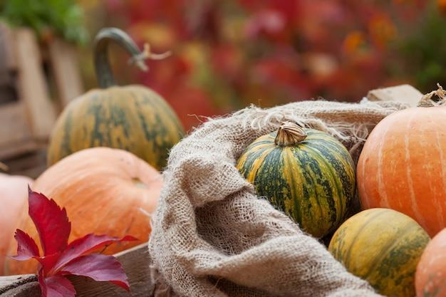 Citrouille dans un sac en lin. concept nature automne. Photo Premium