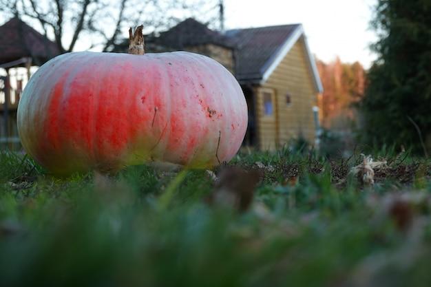 Citrouille sur l'herbe sur le fond du paysage d'automne Photo Premium