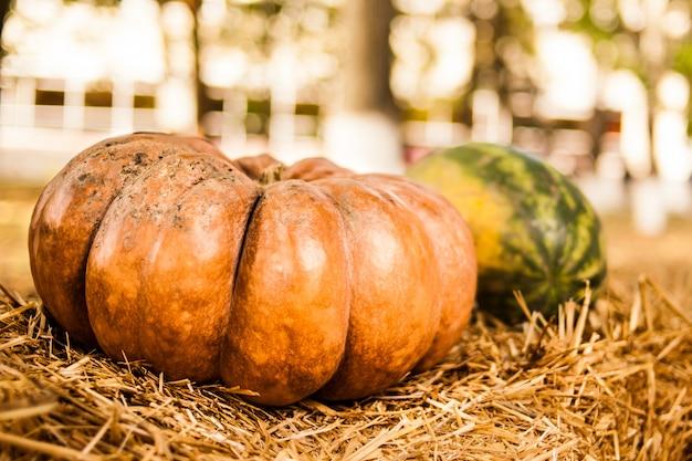 Citrouille orange dans le foin. l'automne. récolte. Photo Premium