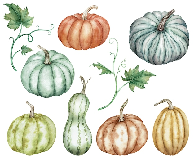 Clipart aquarelle de citrouilles colorées vertes, rouges, orange, bleues et feuilles. collection de thanksgiving de la récolte de citrouilles. Photo Premium