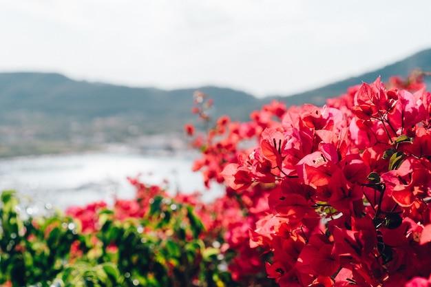 Close-up de plantes à fleurs avec fond flou Photo gratuit