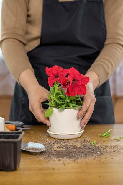 Close Up Pot De Fleurs En Céramique Avec Des Pétunias En Fleurs Rouges Sur Table En Bois Photo Premium