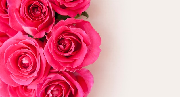 Close-up Roses Roses Sur Fond Blanc Avec Espace De Copie Photo Premium