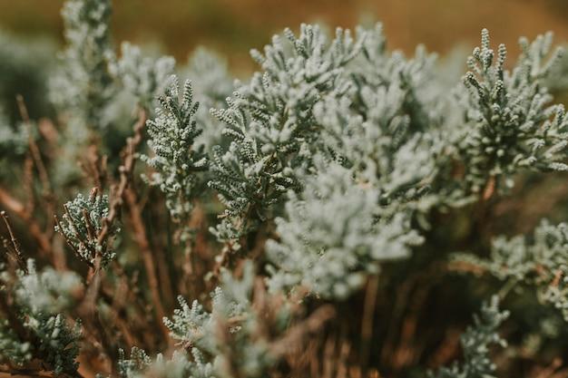 Closeup de beaux buissons Photo Premium