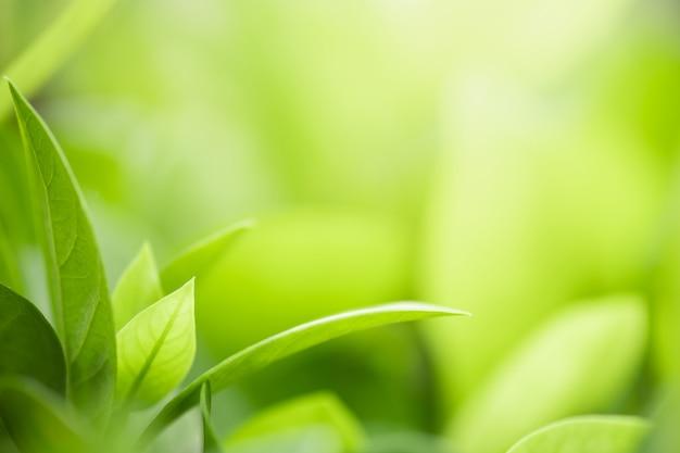 Closeup belle vue sur la nature feuille verte Photo Premium