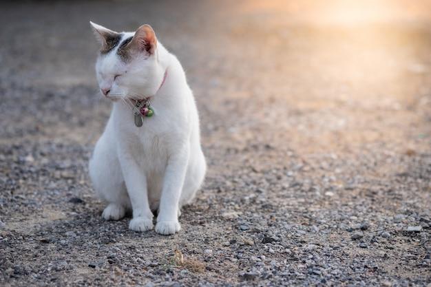 Closeup blanc chat mignon assis sur le sol rocheux et ferme les yeux avec la lumière du soleil orange Photo Premium