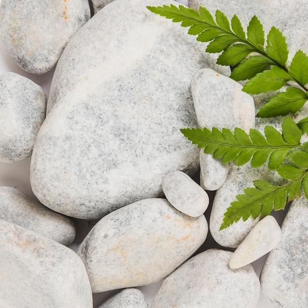 Closeup feuilles sur des pierres lisses Photo gratuit