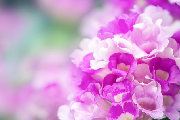 Closeup fleur pourpre beau printemps Photo Premium