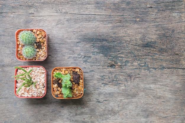 Closeup groupe de cactus dans un pot en plastique sur fond de bureau en bois texturé Photo Premium
