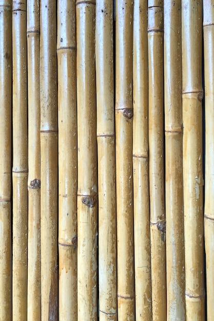 Clôture en bambou sec comme arrière-plan Photo Premium