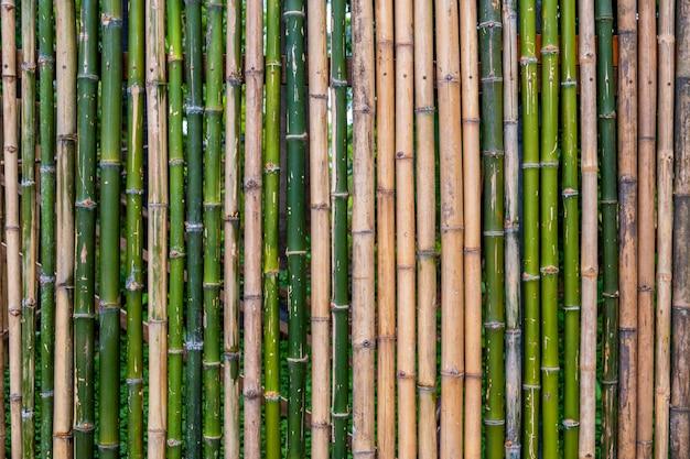 Clôture en bambou vert grunge, fond de texture .. Photo Premium