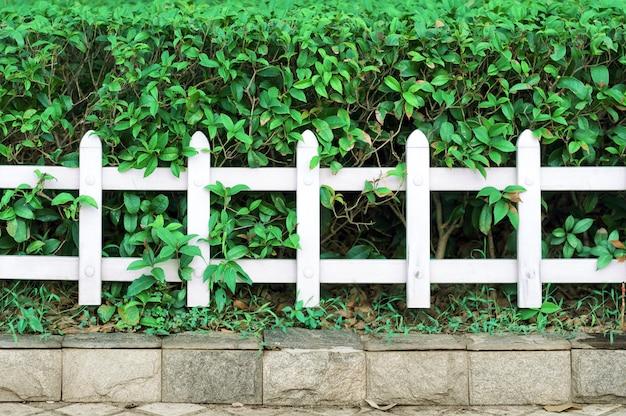 Clôtures et plantes Photo Premium