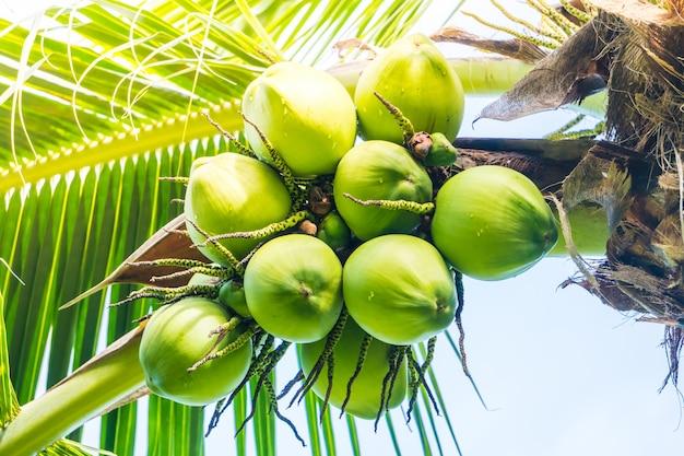 Coconut fruits Photo gratuit