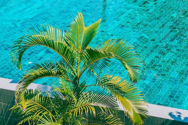 Cocotier autour de la piscine Photo gratuit