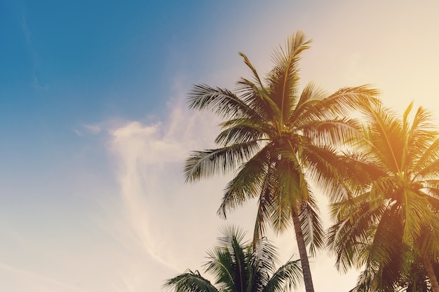 Cocotier sur la côte tropicale avec ton vintage Photo Premium