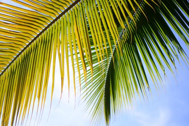 Cocotier en été avec fond de ciel Photo Premium