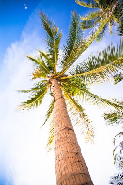 Cocotier sur la plage de sable fin et ciel bleu Photo Premium