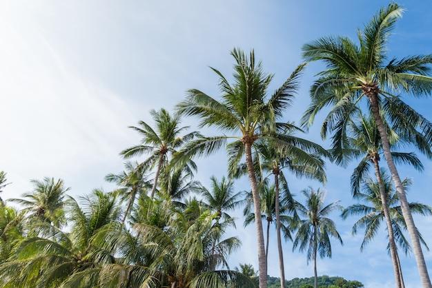 Cocotier sur la plage de thaïlande, cocotier avec un ciel bleu sur la plage Photo Premium