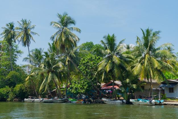 Cocotiers au bord de la rivière. Photo Premium