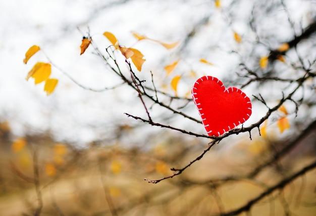 Coeur rouge de feutre sur une branche d'arbre Photo Premium