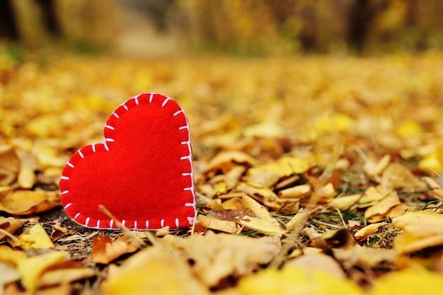 Coeur rouge de feutre close-up sur le fond des feuilles tombées automne jaune. Photo Premium