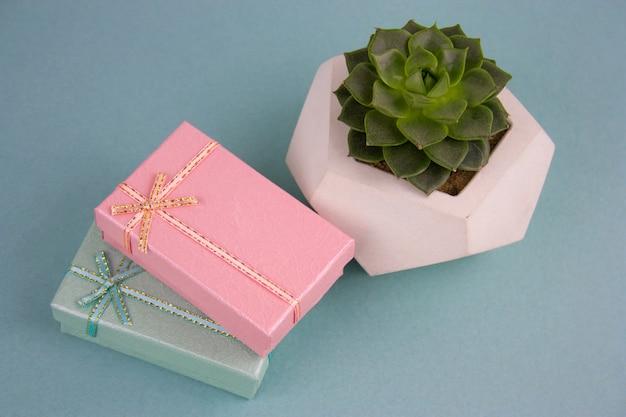 Coffrets cadeaux vue de dessus et plante succulente sur fond bleu Photo Premium