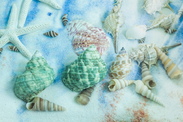 Collection de coquillages sur placé sur le fond de sable Photo Premium