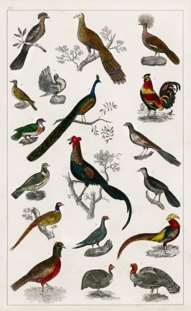 Collection de divers oiseaux de une histoire de la terre et de la nature animée (1820) Photo gratuit