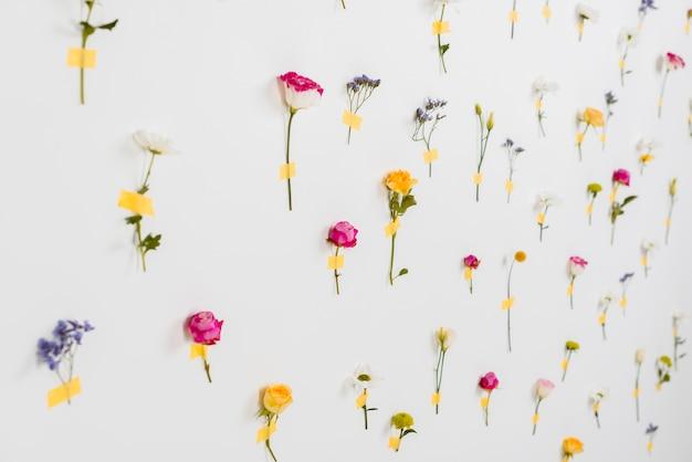 Collection De Fleurs De Printemps En Fleurs Photo gratuit