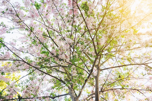 Coloré, arbre, fleur tropicale, thaï Photo Premium