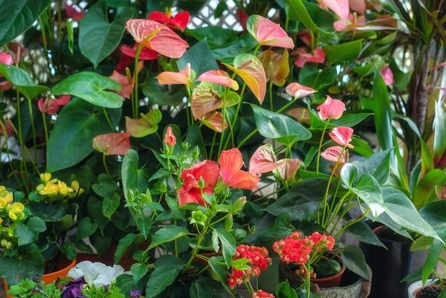 Coloré mélange de fleurs et de plantes dans le magasin de fleurs. Photo Premium