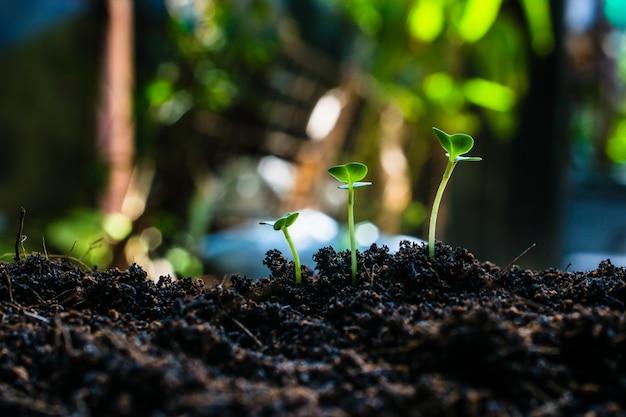 Comment planter la croissance des plants, Photo Premium