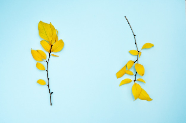 Composition d'automne, cadre de feuilles. deux branches avec des feuilles jaunes, prune, sur un fond bleu clair. Photo Premium