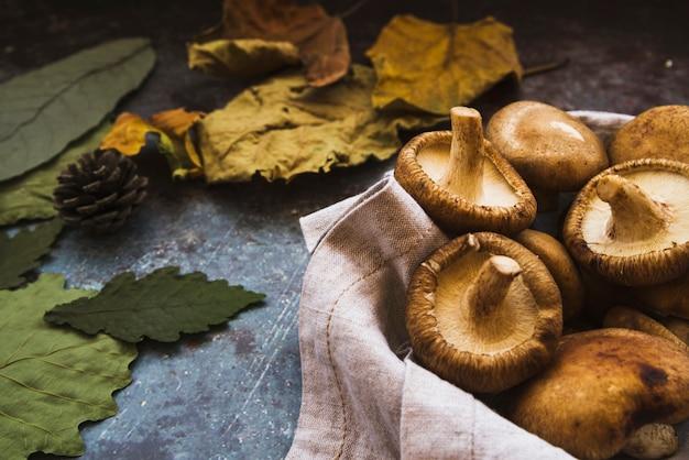 Composition d'automne avec cèpes et feuilles vertes et jaunes flétries Photo gratuit